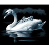 Swan and Cygnets - Reeves Scraperfoil