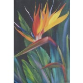 Bob Ross Floral Packet - Bird of Paradise