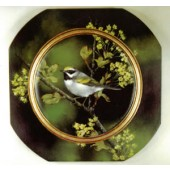 Golden-Winged Warbler/Sugar Maple, Sherry Nelson Packet