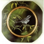 Black-Throated Gray Warbler/Black Willow, Sherry Nelson Packet