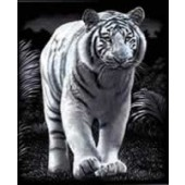White Tiger - Reeves Scraperfoil